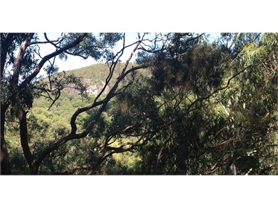 Aussie Scenic Mountain Stay - 5 Minutes walk to Bus